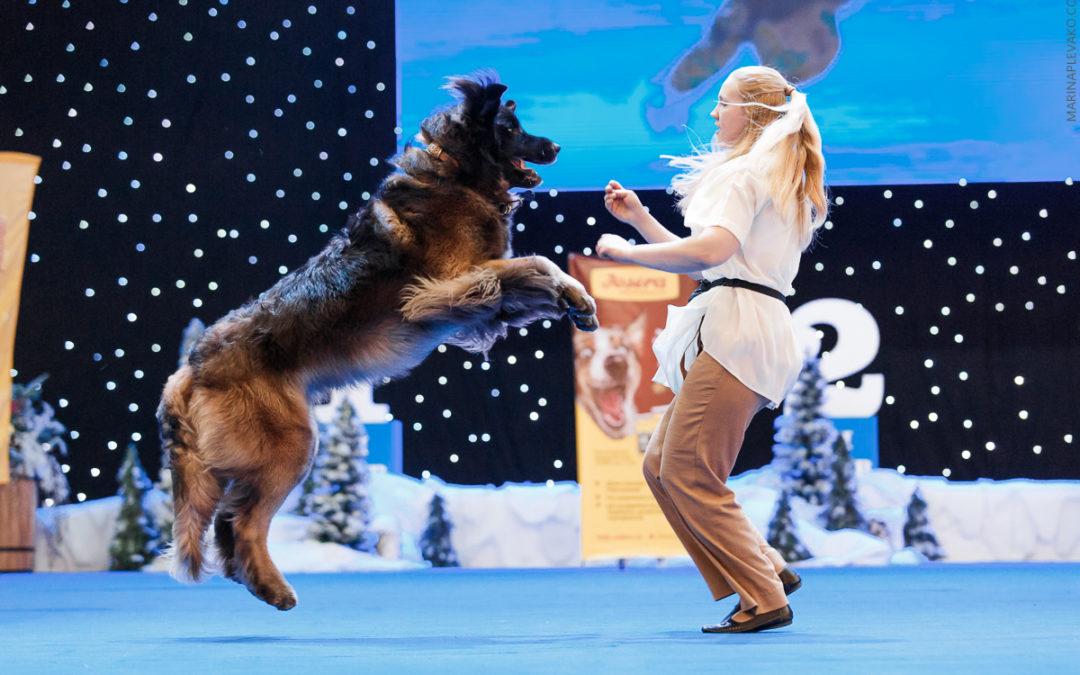 Как начать танцевать с собакой