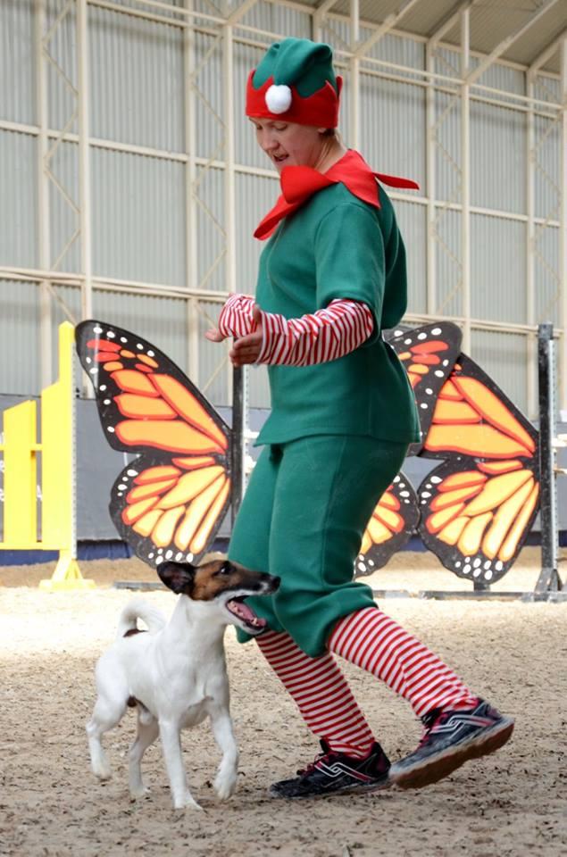 Квалификационные соревнования по танцам с собаками. Осенний Вальс. Днепр