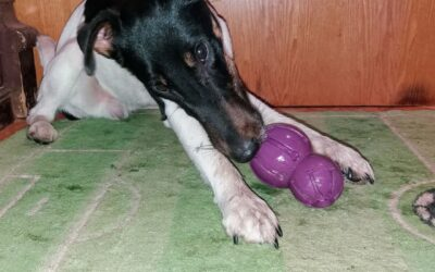Что не могут делать собаки, когда жуют жевательную игрушку