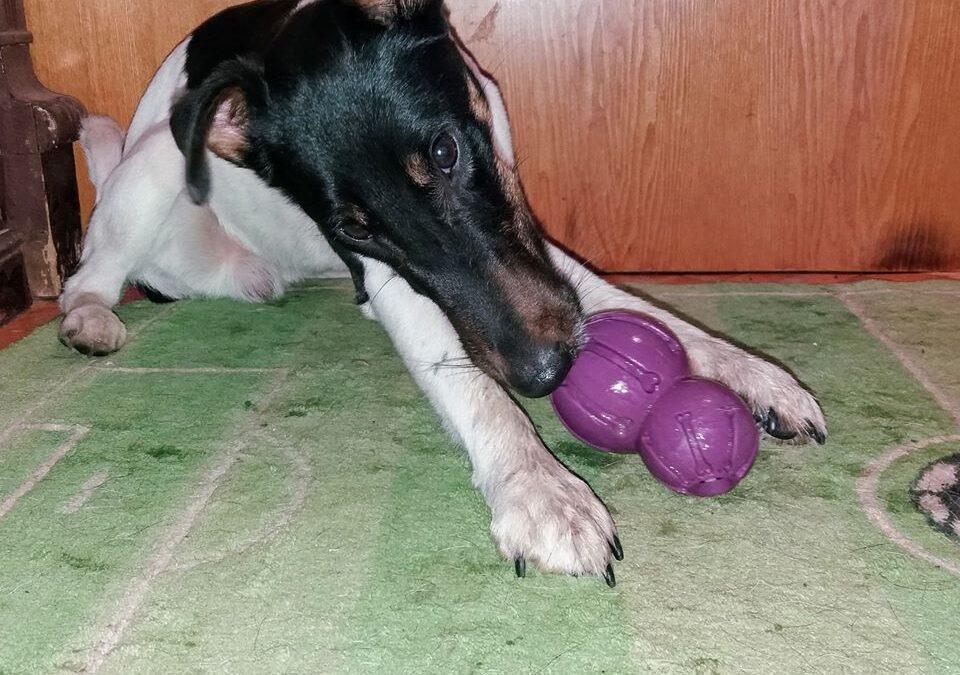 Busy Buddy игрушка фокстерьер